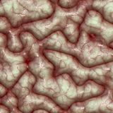 Brain surface and texture Stock Photo