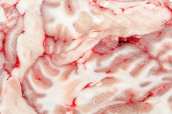 Brain Texture. Very Detailed Macro Photo Of A Brain Section Stock Photography