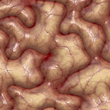 Brain texture. With veins and wrinkles rendered illustration Stock Photos
