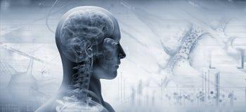 Brain, thinking concept. 3d illustration stock illustration