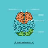 Brain top 1. Schematic illustration of human cerebrum. Made in , easy recolor stock illustration