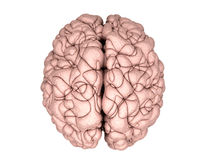 Brain Top View Royalty Free Stock Photo