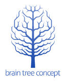 Brain tree of knowledge concept Royalty Free Stock Photography