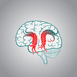 Brain with the twisted convolutions, of the destruction of the brain, stroke, memory Royalty Free Stock Image