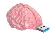 Brain USB flash drive, knowledge concept. 3D illustration Stock Photos