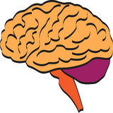Brain. A vector drawing represents brain design royalty free illustration