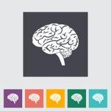 Brain. Stock Photo