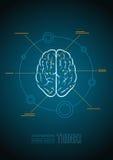 Brain. Vector brain infographic template Stock Photos