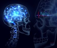 Brain, vector for medicine. A skull shot, neural networks of the brain, Brain activity and performance,. Brain, vector illustration for medicine. A skull shot stock illustration