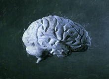 Brain watercolor painting stock photography