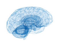 Brain wireframe model. Blue isolated on white background Royalty Free Stock Photo