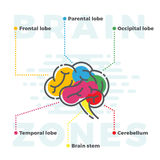 Brain Zones Scheme. Colorful Infographics of Different Lobes in Line and Flat Style. Royalty Free Stock Photography