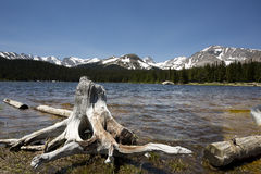 Brainard Lake, Colorado, with tree stump in foreground Royalty Free Stock Images