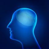 Brainprint ελεύθερη απεικόνιση δικαιώματος