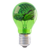 Brains. Inside a green bulb. isolated on white Royalty Free Stock Photography
