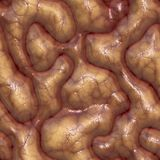 Brains Stock Images