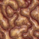 Brains. A large rendered illustration of close up brains vector illustration