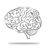 Brains human. Brain drawings used in the study Royalty Free Stock Photography