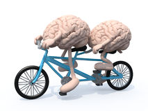 Brains riding tandem bicycle. Two human brains with arms and legs riding tandem bicycle, 3d illustration stock illustration