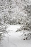 brama śniegu drzewa Fotografia Stock