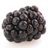 Bramble berry Royalty Free Stock Photos