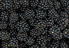 Bramble Blackberry background - Macro Royalty Free Stock Photography
