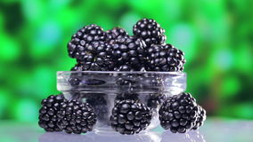 Bramble (blackberry) heap rotating stock video footage
