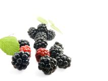 Brambleberry. Blackberries isolated on white background stock images