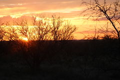 Brambles και ηλιοβασίλεμα Στοκ φωτογραφία με δικαίωμα ελεύθερης χρήσης