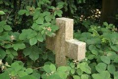 brambles σταυρός που εισβάλλε& Στοκ Εικόνες