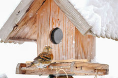 The Brambling bird perching on a wooden bird feeder house Royalty Free Stock Photography