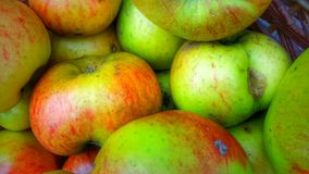 Bramley-Äpfel Lizenzfreie Stockfotografie