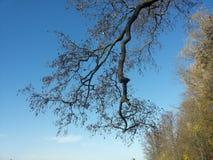 brampton Στοκ Φωτογραφίες