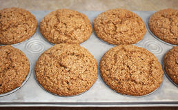 Bran Muffins. Hot out of the oven - Homemade Bran Muffins in baking pan.  A healthy and nutritious breakfast and snack Royalty Free Stock Photography