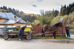 A big light brown dog lies on the ground near his house and guards him. Bran, Romania, October 09, 2017 : One man unloads a horse harnessed in a cart in a suburb Royalty Free Stock Photo