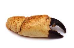 Branca del granchio isolata su bianco immagini stock