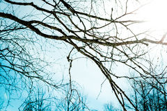 Brances of a tree and the sun Royalty Free Stock Photo
