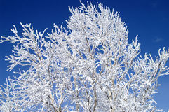 Branch. World of ice and snow Royalty Free Stock Photo
