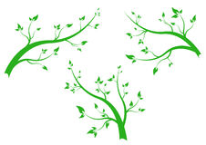 Branch. Vegetate - isolated on background Royalty Free Stock Photography