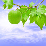Branch. Green and fresh apple in the tree on a lake Royalty Free Stock Image
