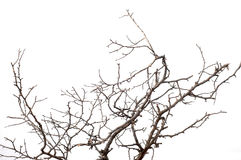 Branch Royalty Free Stock Images