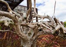 Branch. Dead Branch in the Garden Stock Photo