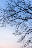 Branch. Tree branches silhouette with blue sky royalty free illustration