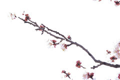 Branch. Image of branch with white background Stock Photo