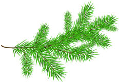 Branch. Pine branch on white background stock illustration
