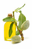 Branch of almond and almond oil Stock Photo