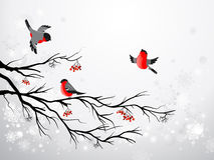 Branch And Birds Bullfinch Royalty Free Stock Photos