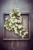 Branch of apple flowers in vintage box Stock Photo