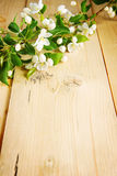 Branch of apple tree with blooming flowers on a wooden board Stock Photos