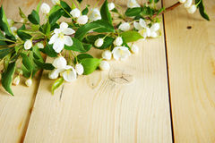 Branch of apple tree with blooming flowers on wooden planks Royalty Free Stock Photo